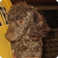 Adopt A Pet :: Harvey - Salem, NH