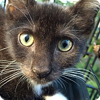 Adopt A Pet :: Uncle Pete - Brooklyn, NY