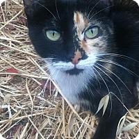 Adopt A Pet :: Olivia - Alamo, CA