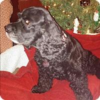Adopt A Pet :: Magnum - Marietta, GA