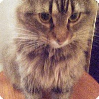 Adopt A Pet :: Ruby - Farmington, AR
