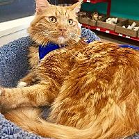 Adopt A Pet :: Rosa - Woodland Hills, CA