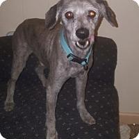 Adopt A Pet :: Andre - Hayes, VA