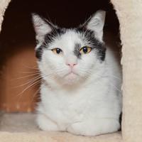 Adopt A Pet :: Estrella - Mission Hills, CA