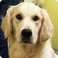 Adopt A Pet :: Bishop - BIRMINGHAM, AL