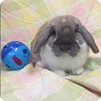 Adopt A Pet :: Captain - Paramount, CA