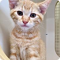 Adopt A Pet :: Lucky - Warrenton, MO