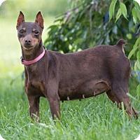 Adopt A Pet :: Sandie - Alexandria, KY