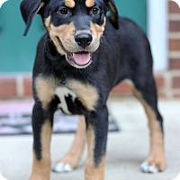 Adopt A Pet :: Rodi - Waldorf, MD