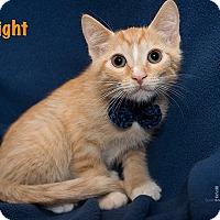 Adopt A Pet :: Dwight - San Juan Capistrano, CA