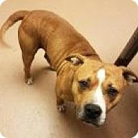 Adopt A Pet :: Beefcake 7667 - Columbus, GA
