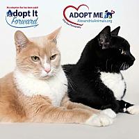 Adopt A Pet :: Midnight - Alexandria, VA