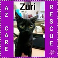 Adopt A Pet :: Zuri - San Tan Valley, AZ