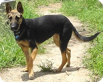 German Shepherd Dog Dog for adoption in SAN ANTONIO, Texas - ANYA