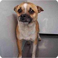 Adopt A Pet :: Gumbo - Poway, CA