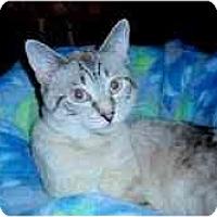 Adopt A Pet :: Langley - Arlington, VA