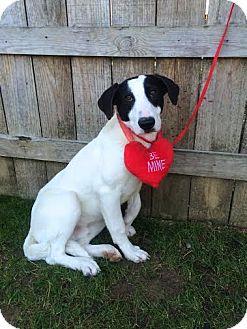 Labrador Retriever Mix Puppy for adoption in Darlington, South Carolina - Tucker