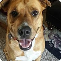 Adopt A Pet :: LIBBY - Phoenix, AZ