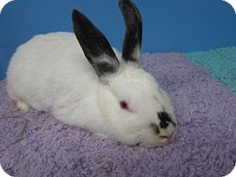 Other/Unknown Mix for adoption in Montclair, California - Frosty