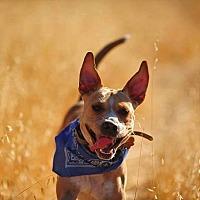 Adopt A Pet :: Lina - Baxter, TN