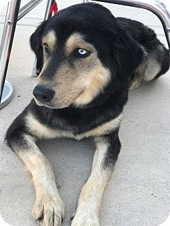 Shepherd (Unknown Type)/Husky Mix Dog for adoption in Marietta, Georgia - Maddie