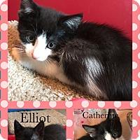Adopt A Pet :: Anastasia - Canton, OH