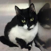 Adopt A Pet :: Cookie - Lufkin, TX