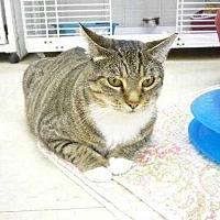 Adopt A Pet :: Shea - Margate, FL