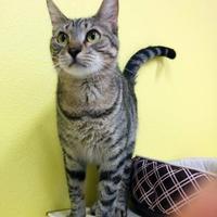 Adopt A Pet :: Spout - Monticello, IA