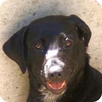 Adopt A Pet :: Ebony - Oakland, AR
