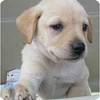 Adopt A Pet :: May - Cumming, GA