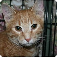 Adopt A Pet :: Taco - Frederick, MD