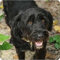 Adopt A Pet :: Pita - Nashville, TN