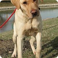 Adopt A Pet :: Bella - Lewisville, IN