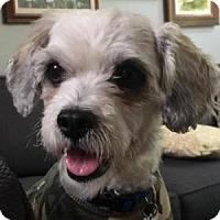 Adopt A Pet :: Murphy - La Costa, CA