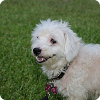 Adopt A Pet :: Marley - Conroe, TX