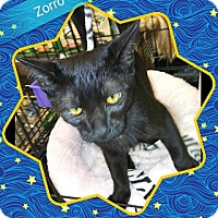 Adopt A Pet :: Zorro - San Bernardino, CA