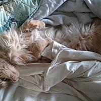 Adopt A Pet :: Charlie - Covington, PA