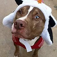Adopt A Pet :: Cowboy - Wichita, KS
