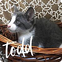 Adopt A Pet :: Todd - Hearne, TX