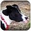 Photo 2 - Labrador Retriever/Boxer Mix Dog for adoption in Covington, Kentucky - Romper