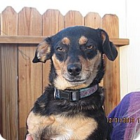 Adopt A Pet :: Cupcake - Littlerock, CA