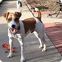 Adopt A Pet :: TJ in Houston - Houston, TX