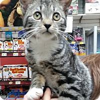 Adopt A Pet :: Minnie - East Meadow, NY