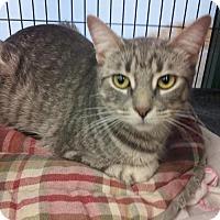 Adopt A Pet :: Celine - Hamilton, ON