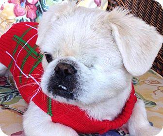 Pekingese Mix Dog for adoption in CUMMING, Georgia - Valor