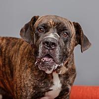 Adopt A Pet :: Homer - Mission Hills, CA