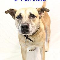 Adopt A Pet :: Frankie - Bradenton, FL