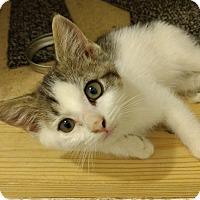 Adopt A Pet :: Dalton - Armuchee, GA