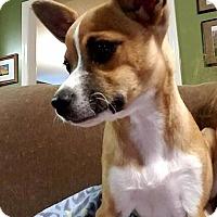Adopt A Pet :: Blanche - greenville, SC